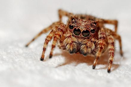 arachnid2