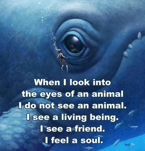a soul