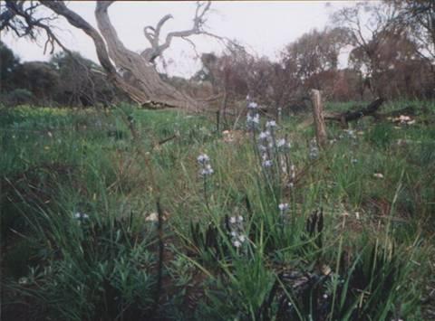 ferguson road bush